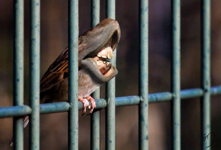 体の半分が口の鳥6
