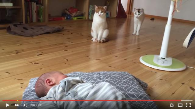 s_ネコが赤ちゃんと初対面7