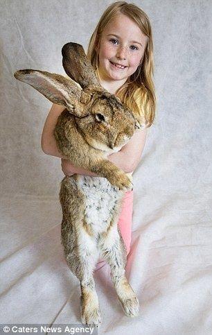 世界一大きいウサギ7