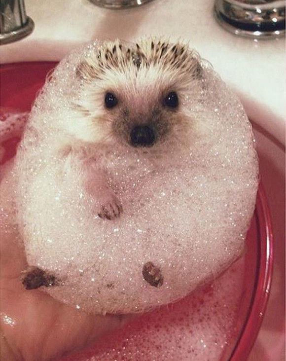 入浴中の動物9