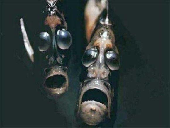 深海生物7