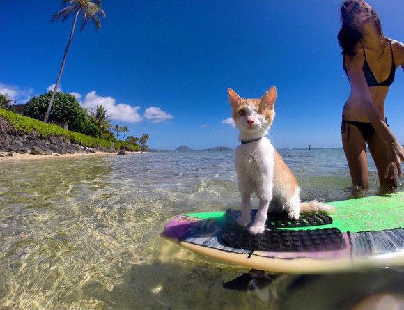 波乗り猫4