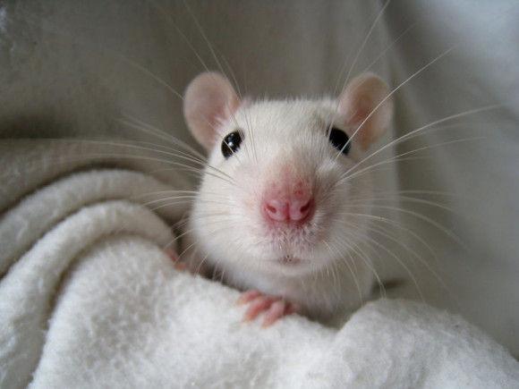 可愛らしい動物の画像17