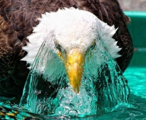 入浴中の動物25