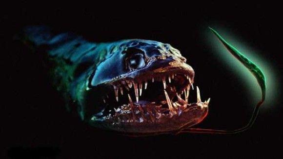 深海生物11
