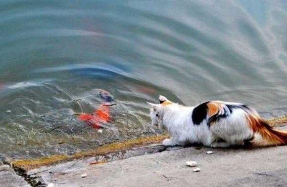 金魚VSネコ1