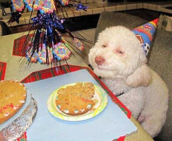 誕生日を祝ってくれるペット画像2