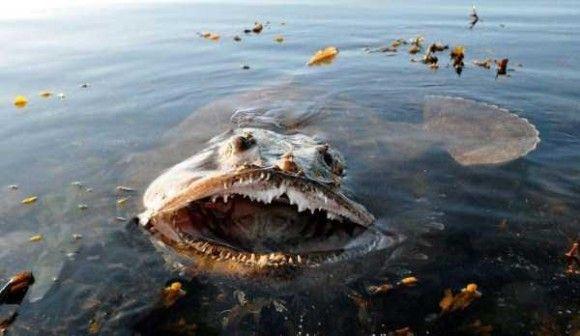 深海生物19