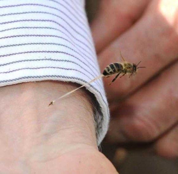 蜂が刺す瞬間