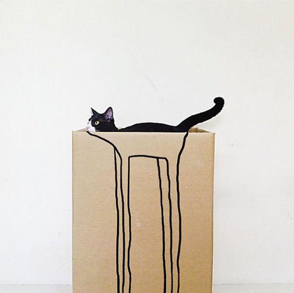 猫画像10