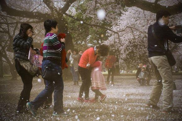 日本の桜14