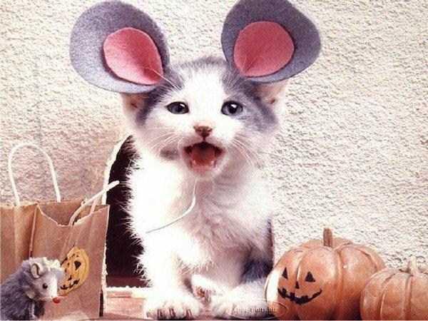 13コスチュームをした猫