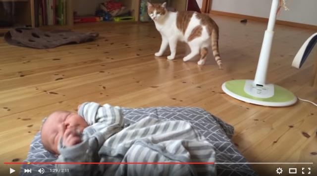 s_ネコが赤ちゃんと初対面6