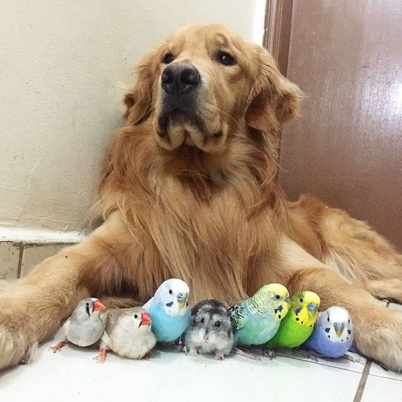 鳥と犬が友達になった結果1
