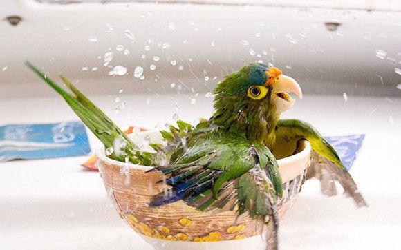 入浴中の動物5