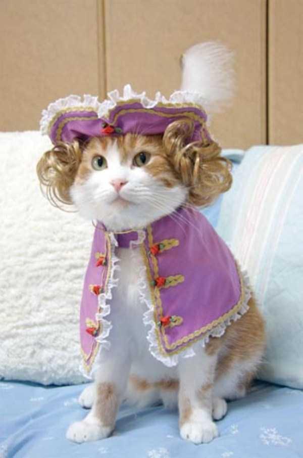 1コスチュームをした猫