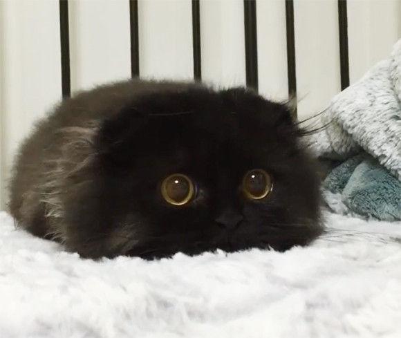 モフモフなネコ1