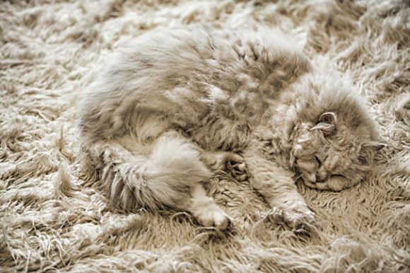 猫画像15