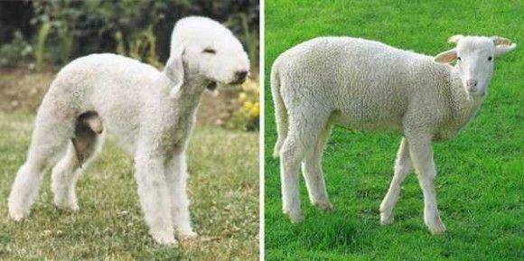 あるものに似すぎな犬24