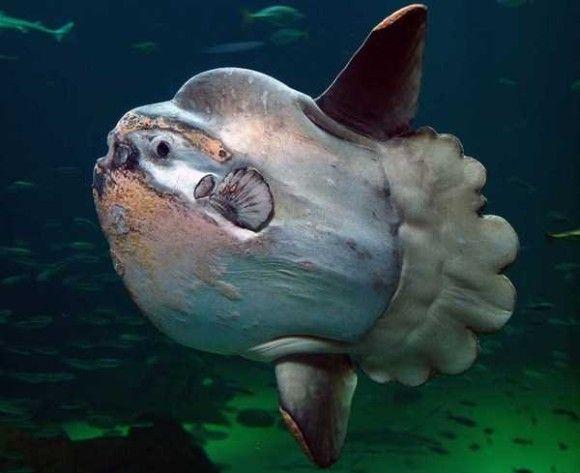 深海生物10