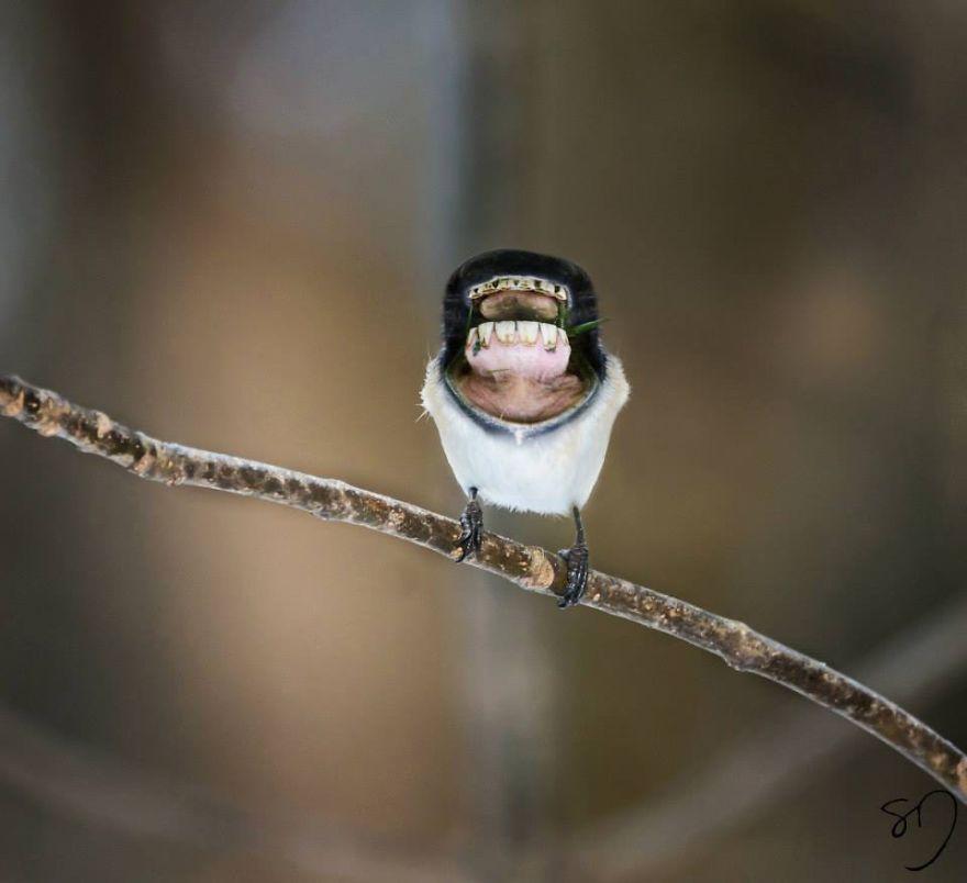 体の半分が口の鳥5
