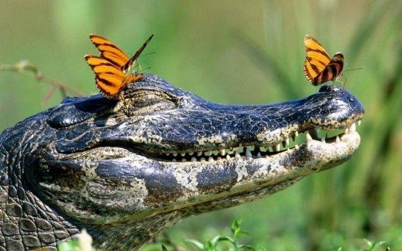 野生の動物のいい写真19