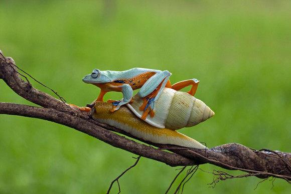 カタツムリの背中に乗ったカエル4