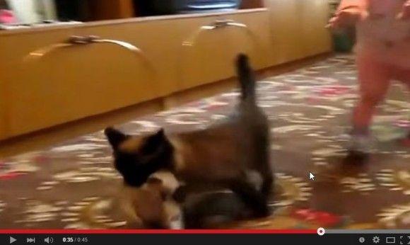 赤ちゃんから子猫を取り返そうとする親猫6