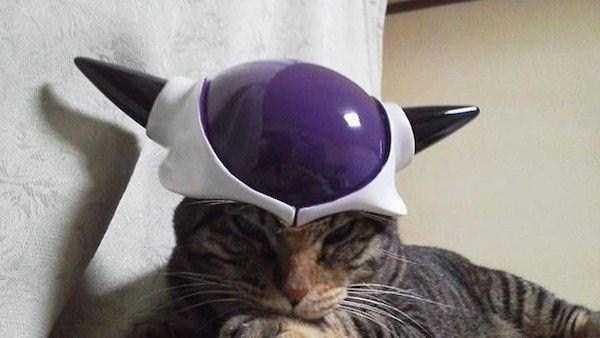 2コスチュームをした猫