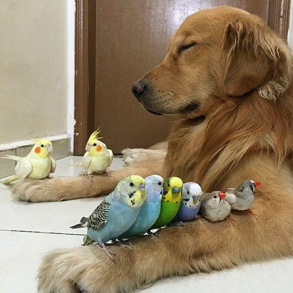 鳥と犬が友達になった結果11