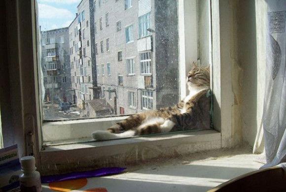 温まることが大好きネコちゃん7