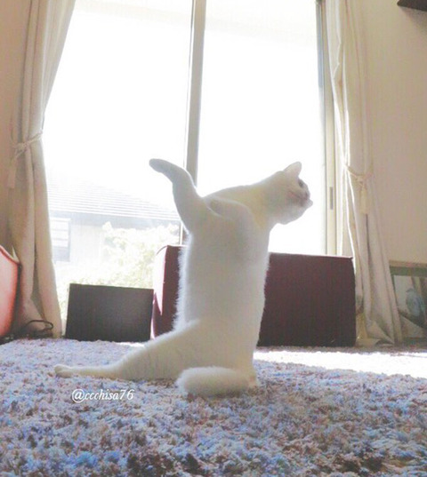 バレエを踊る猫8