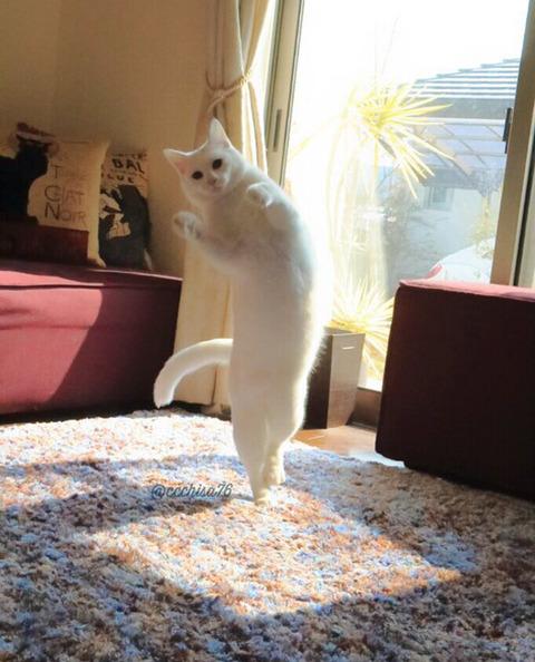 バレエを踊る猫5