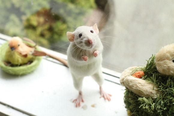 可愛らしい動物の画像9
