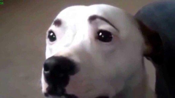 犬猫の面白画像7