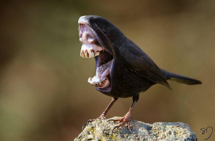 体の半分が口の鳥1