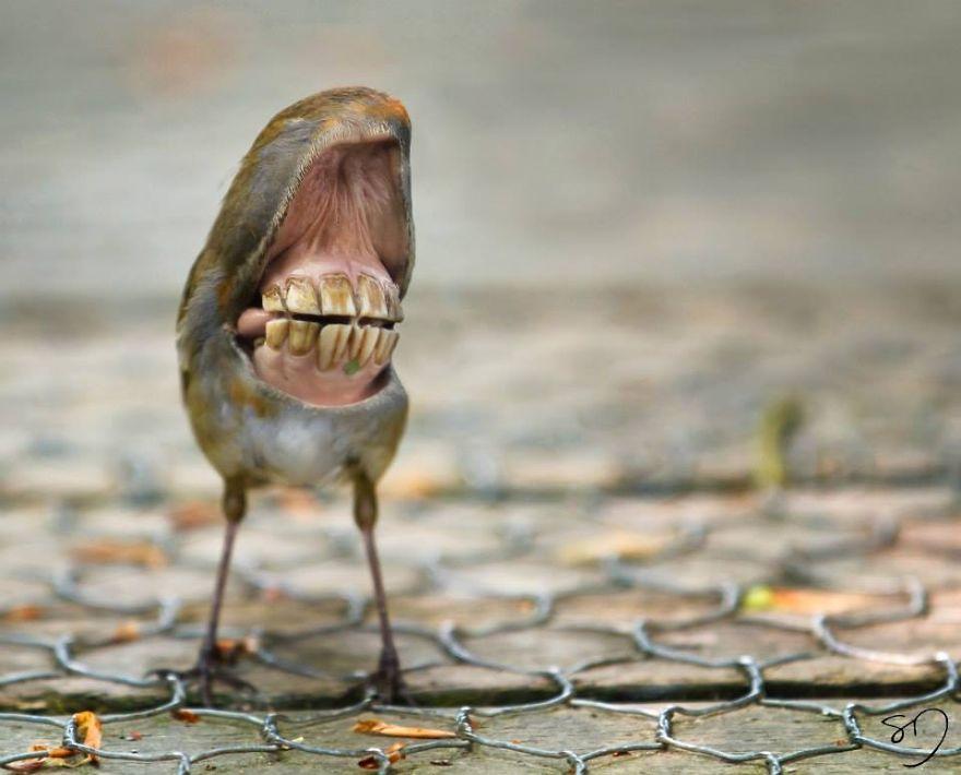 体の半分が口の鳥11
