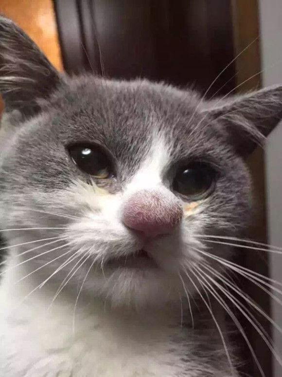 蜂に刺されて腫れちゃった1