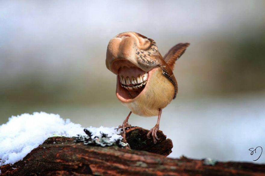 体の半分が口の鳥3