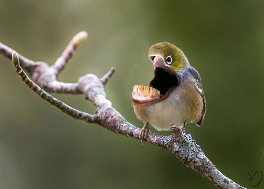 体の半分が口の鳥12