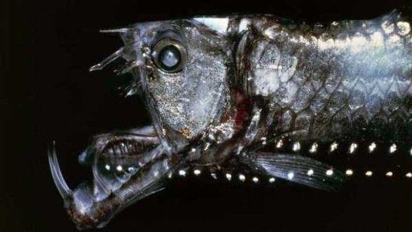 深海生物20