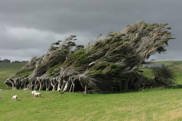 地球上でもっとも凄い木4
