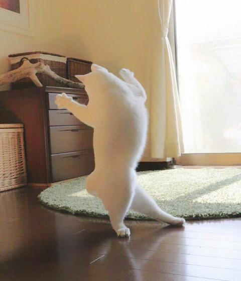 バレエを踊る猫6