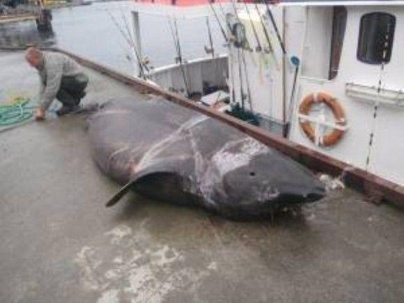 化け物サメ2