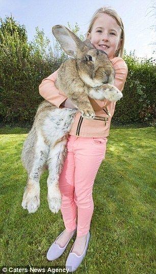 世界一大きいウサギ4
