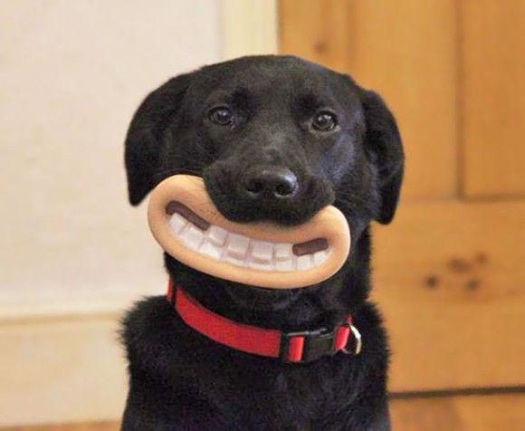 犬のおもちゃ1