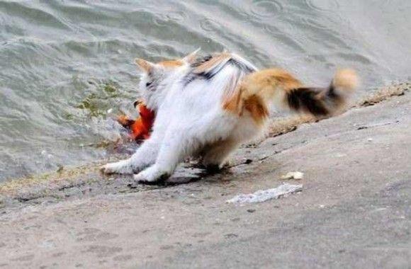 金魚VSネコ7