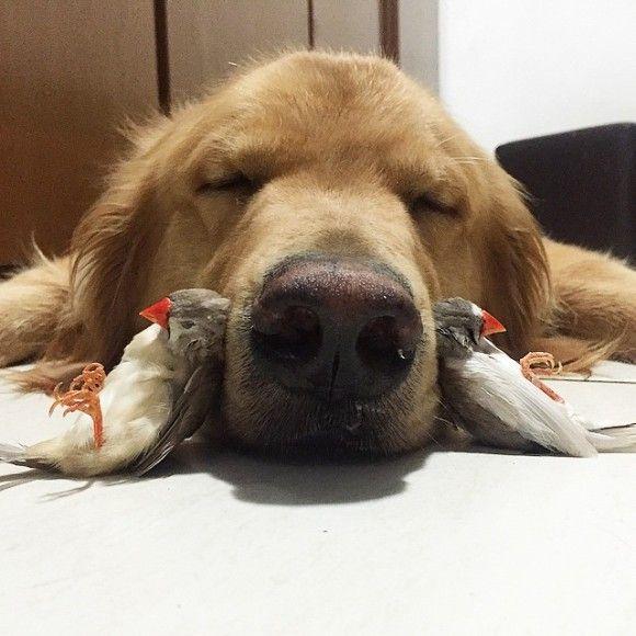 鳥と犬が友達になった結果3