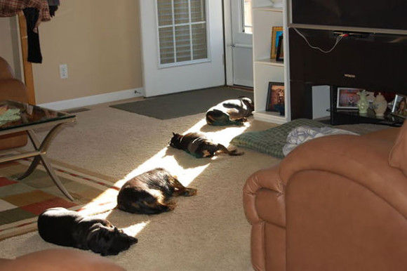 暖かい所を好む動物3