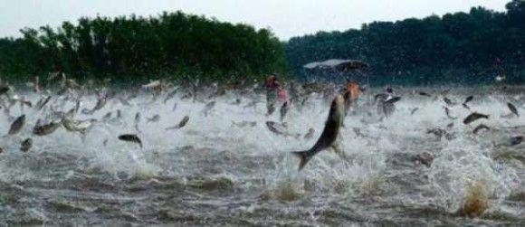 飛び跳ねる魚